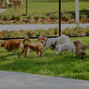 Large Dog Park at Tapestry Apartments